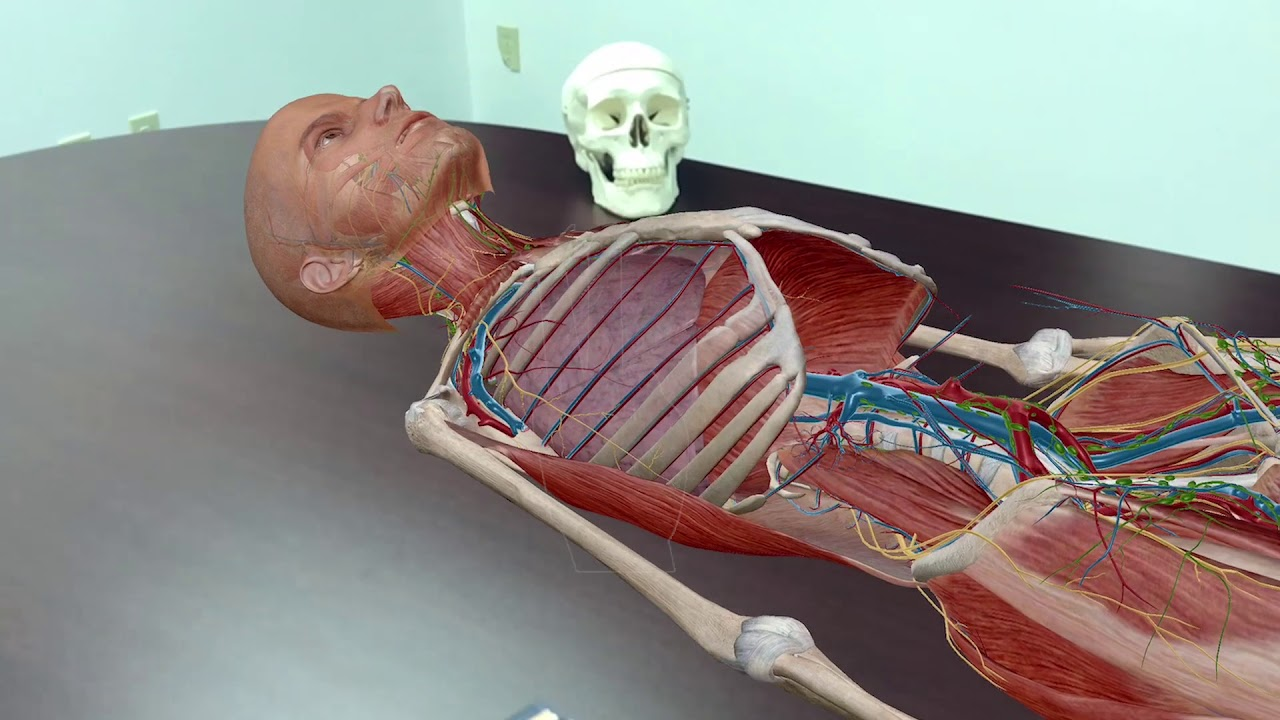 anatomy with augmented reality